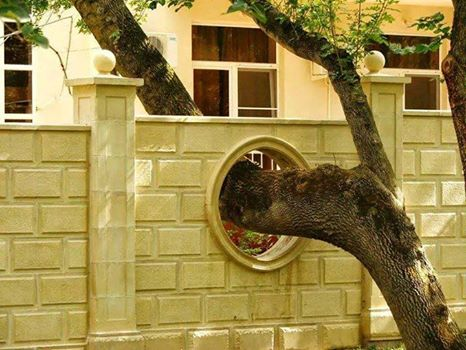 Estas personas hicieron todo lo posible para salvar el árbol de su casa 19