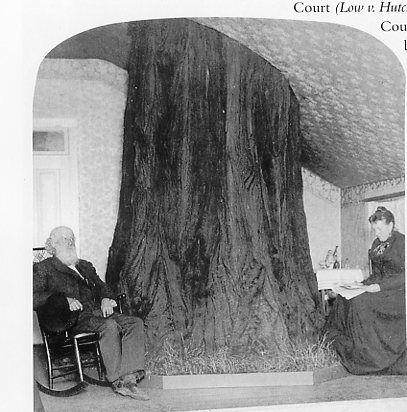 Estas personas hicieron todo lo posible para salvar el árbol de su casa 2