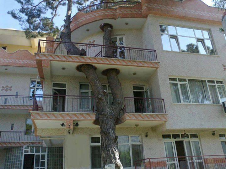 Estas personas hicieron todo lo posible para salvar el árbol de su casa 7