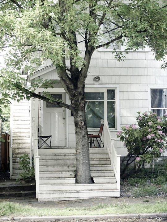 Estas personas hicieron todo lo posible para salvar el árbol de su casa 8