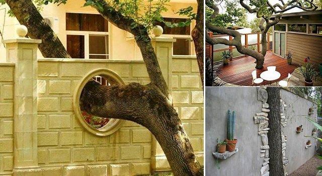 Estas personas hicieron todo lo posible para salvar el árbol de su casa
