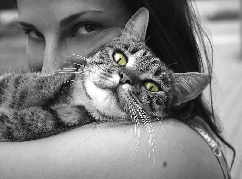 Ver videos de gatos aumenta la energía positiva