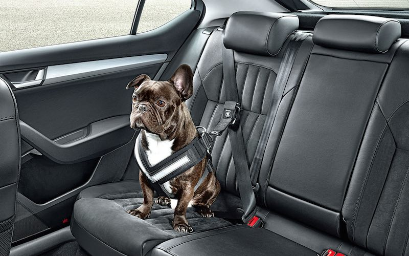 Skoda presenta un cinturón de seguridad para mantener tu perro seguro en la carretera
