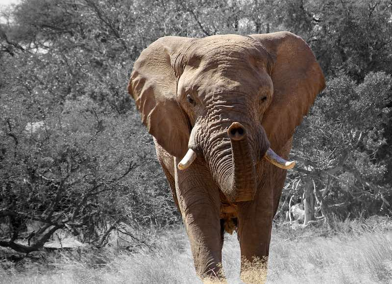 Conservacion de la vida animal