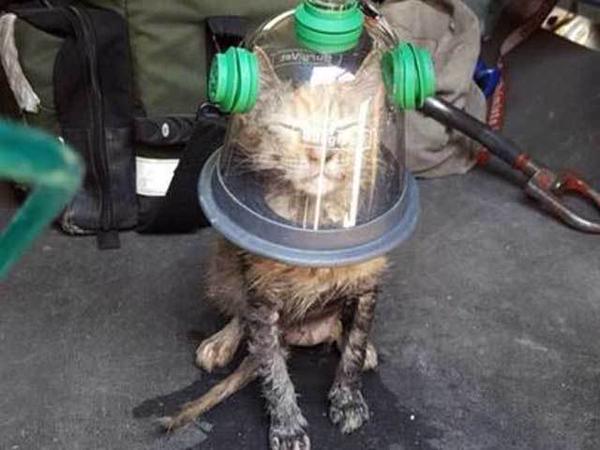 Salvan a un gato con máscara de oxígeno para animales