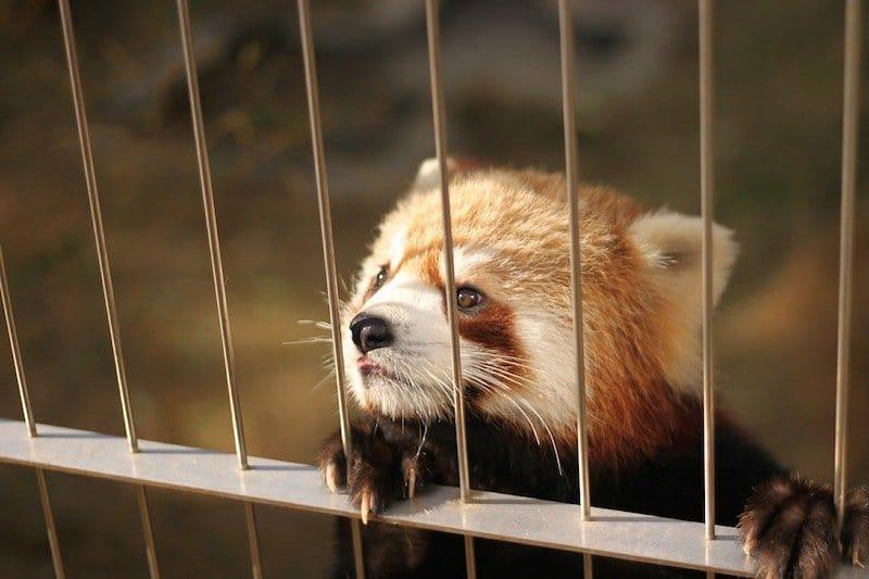 Costa Rica prohibe zoologicos