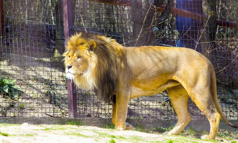 Prohiben zoologicos en Costa Rica