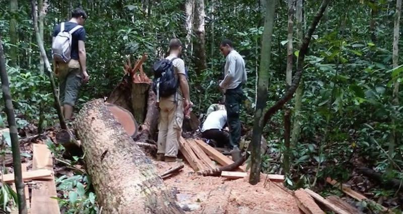 Sistema para salvar los bosques usando smartphones viejos