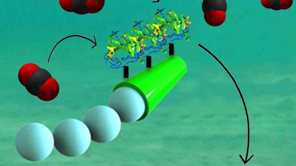 Micromotores de encimas