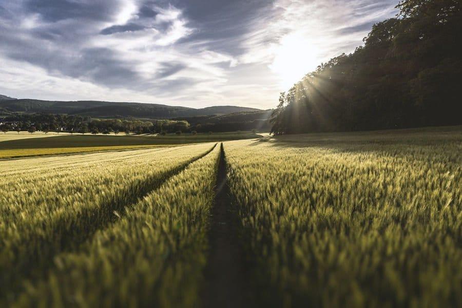 Irlanda del Norte prohíbe el cultivo de alimentos transgénicos