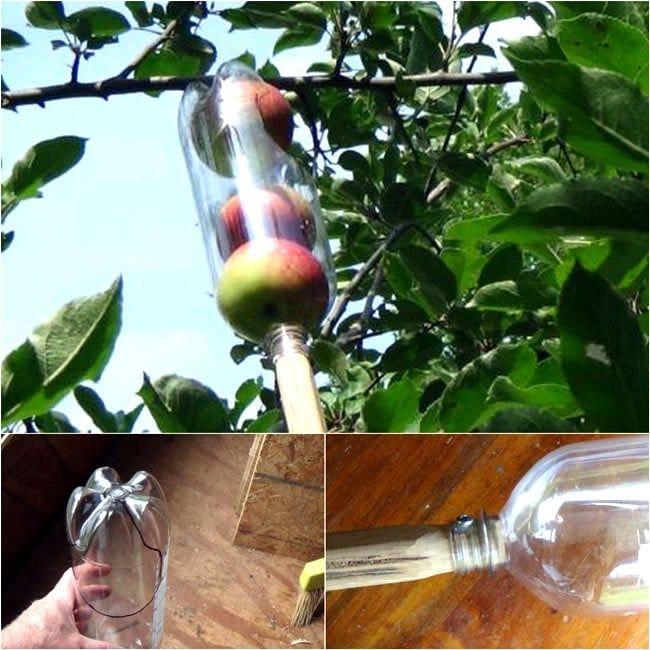Recogedor de fruta