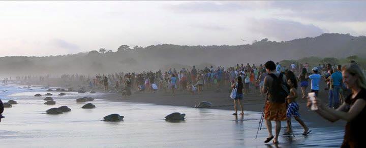Turistas playa tortugas Costa Rica