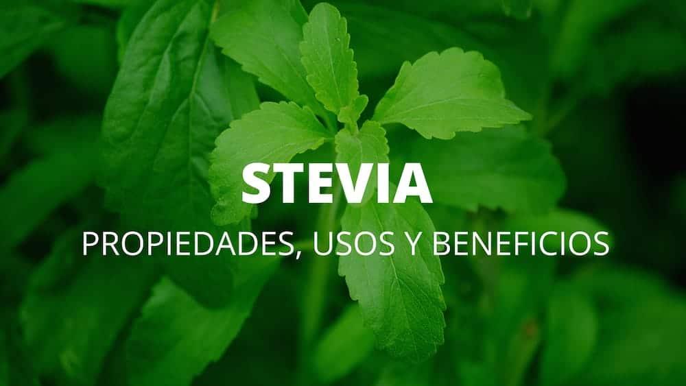 Stevia-1