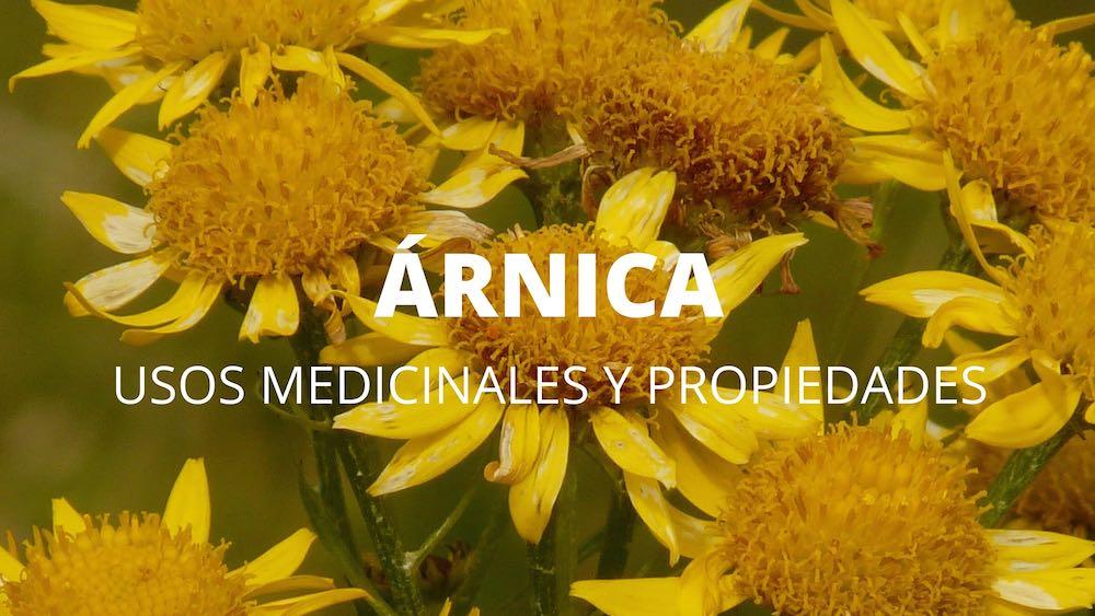 Árnica, usos medicinales y propiedades