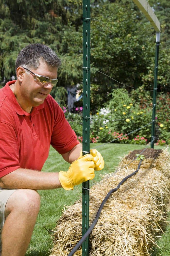 Cómo cultivar tomates en balas de paja2