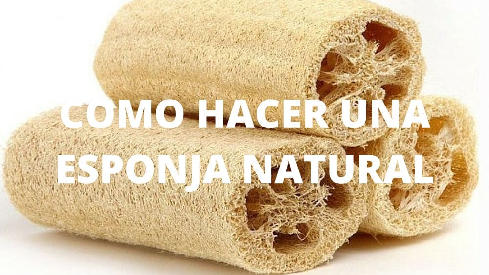 Como hacer una esponja natural - Esponja natural vegetal ...