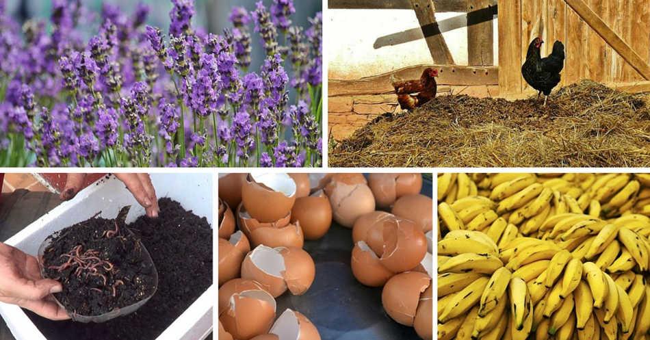 Fertilizantes orgánicos caseros