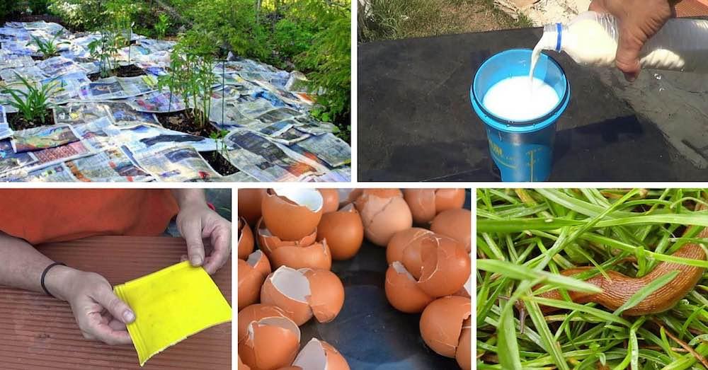 Pesticidas-caseros-ecol%c3%b3gicos-para-plantas