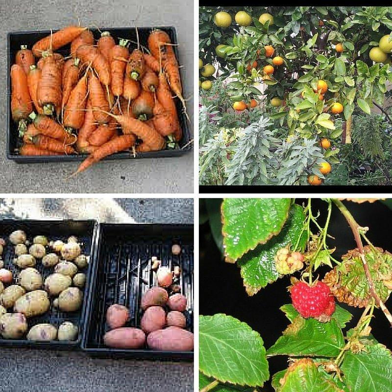 Angelo Eliade frutas y verduras