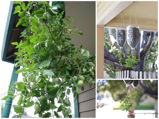 Como-plantar-tomates-en-botellas-de-pl%c3%a1stico