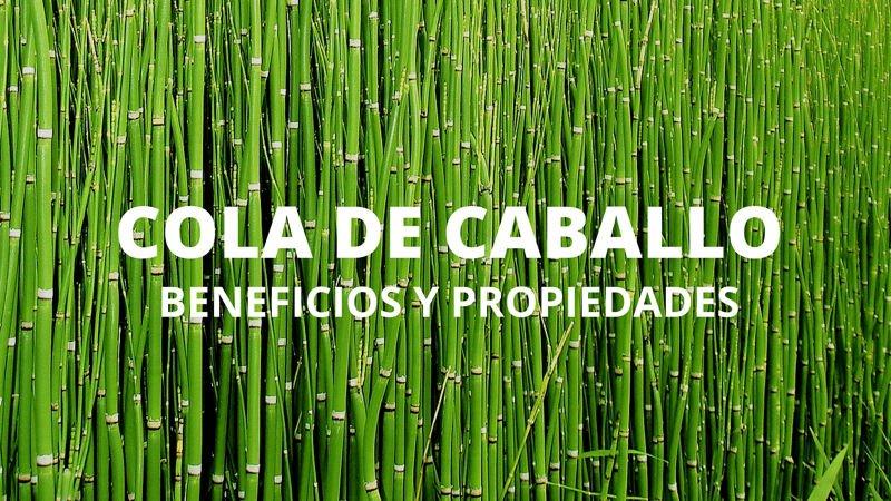 Propiedades Y Beneficios De La Cola De Caballo