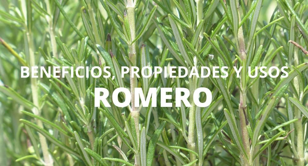 Beneficios propiedades y usos del romero for Planta decorativa con propiedades medicinales crucigrama
