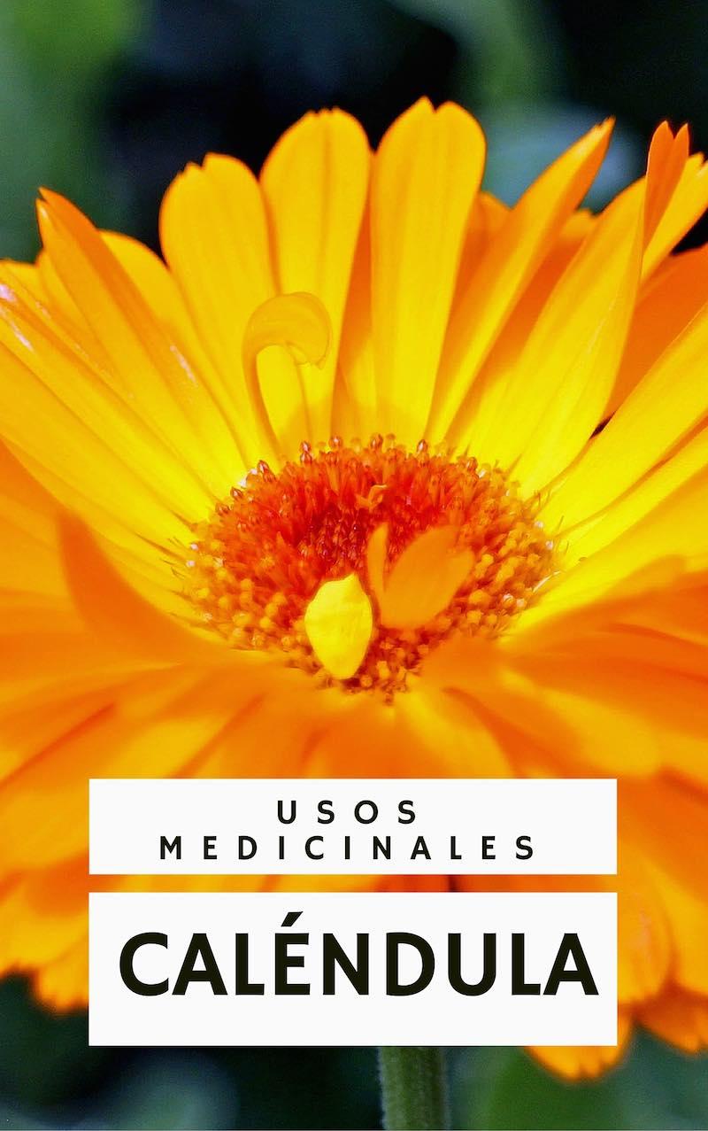 La Caléndula y sus usos medicinales