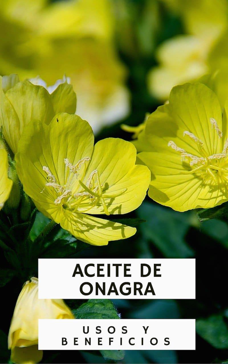 Aceite de Onagra: usos, beneficios y propiedades