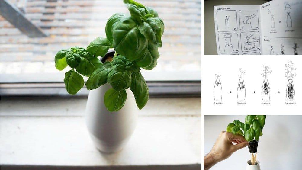 Amphora. Kit de cultivo hidropónico para cultivar plantas en casa
