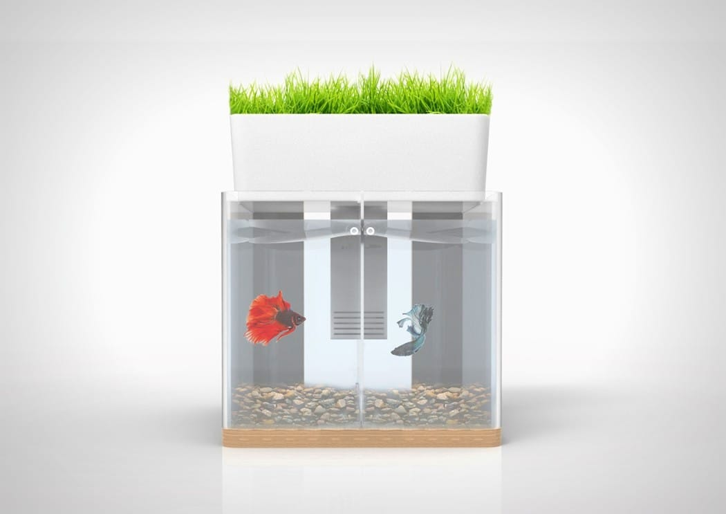 DUO Aquarium Garden1