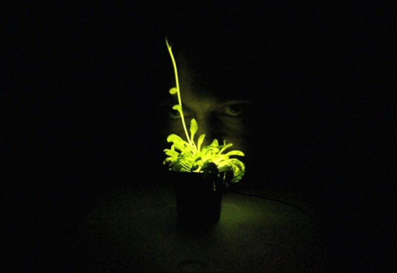 Glowing-plant-project