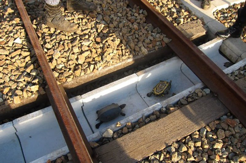 Túneles para salvar tortugas bajo las vías de los trenes japoneses