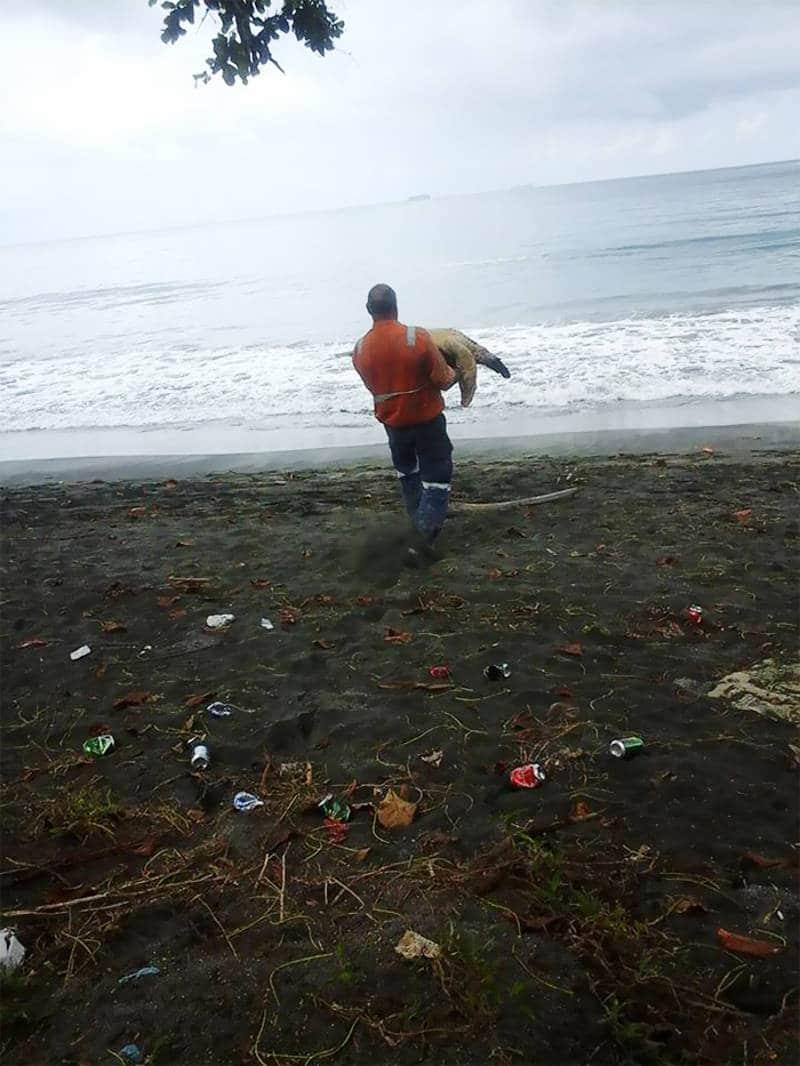 Tortugas salvadas Papua Guinea1