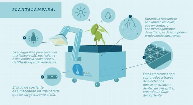Plantalampara Infografia