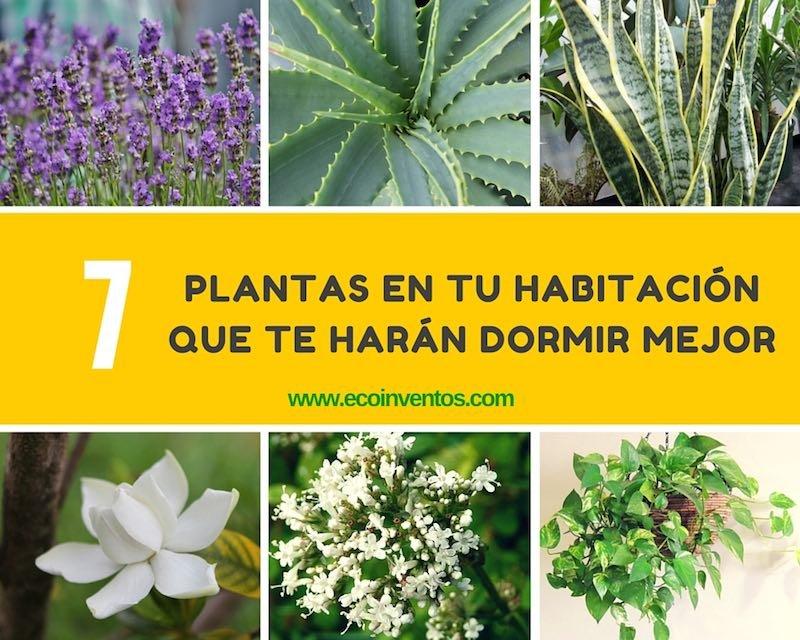7 plantas en tu habitaci n que te har n dormir mejor - Plantas para habitacion ...