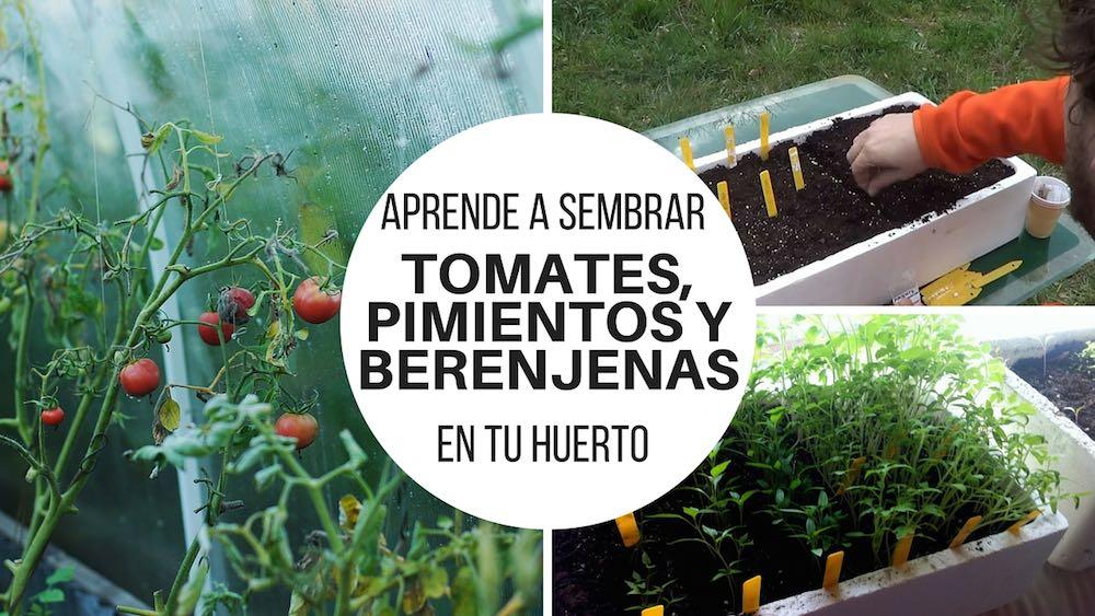 Aprende-a-sembrar-tomates