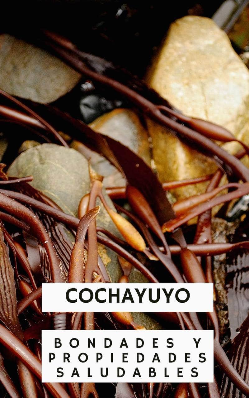 Beneficios del cochayuyo para adelgazar
