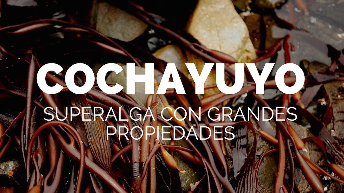 Cocheyuyo-superalga