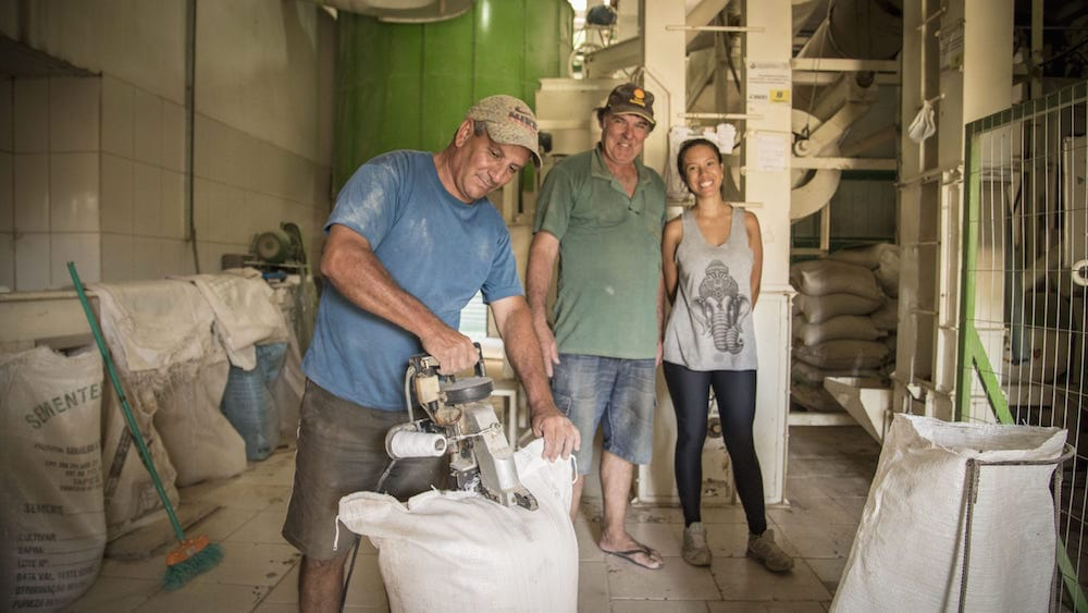 Cooperativa arroz Brasil