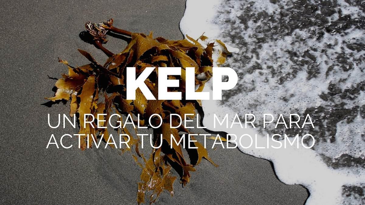 Kelp, un regalo del mar para activar tu metabolismo