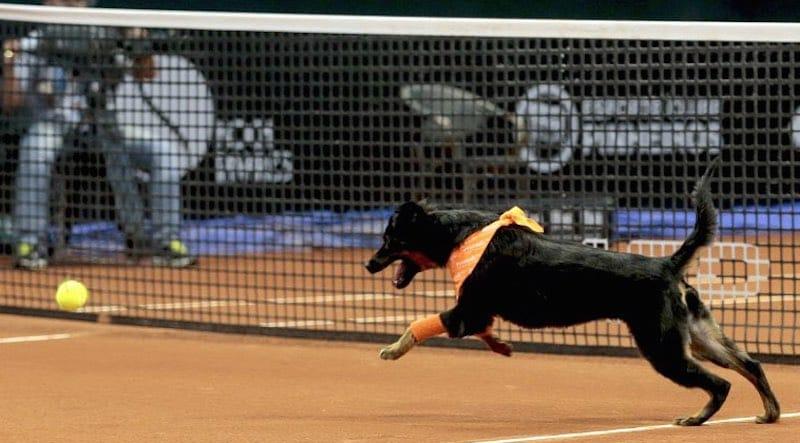 Perros recogepelotas Sau Paulo1
