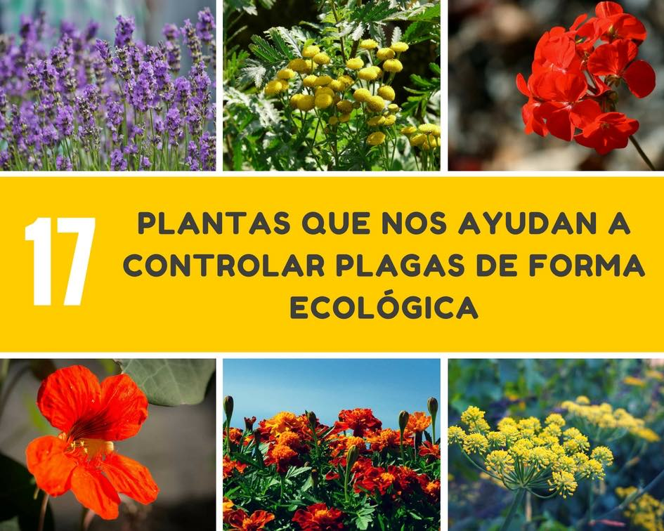 Plantas-controlar-plagas-de-forma-ecologica
