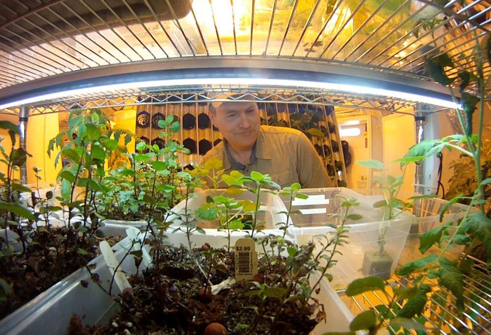 cúpula verde1