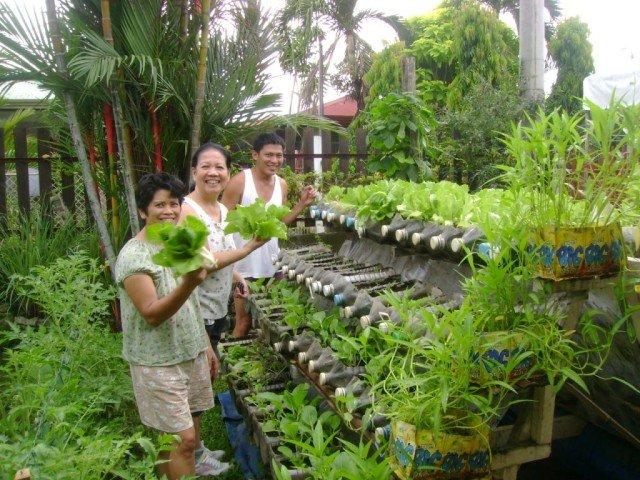 Cultivo escalonado con garrafas de plástico