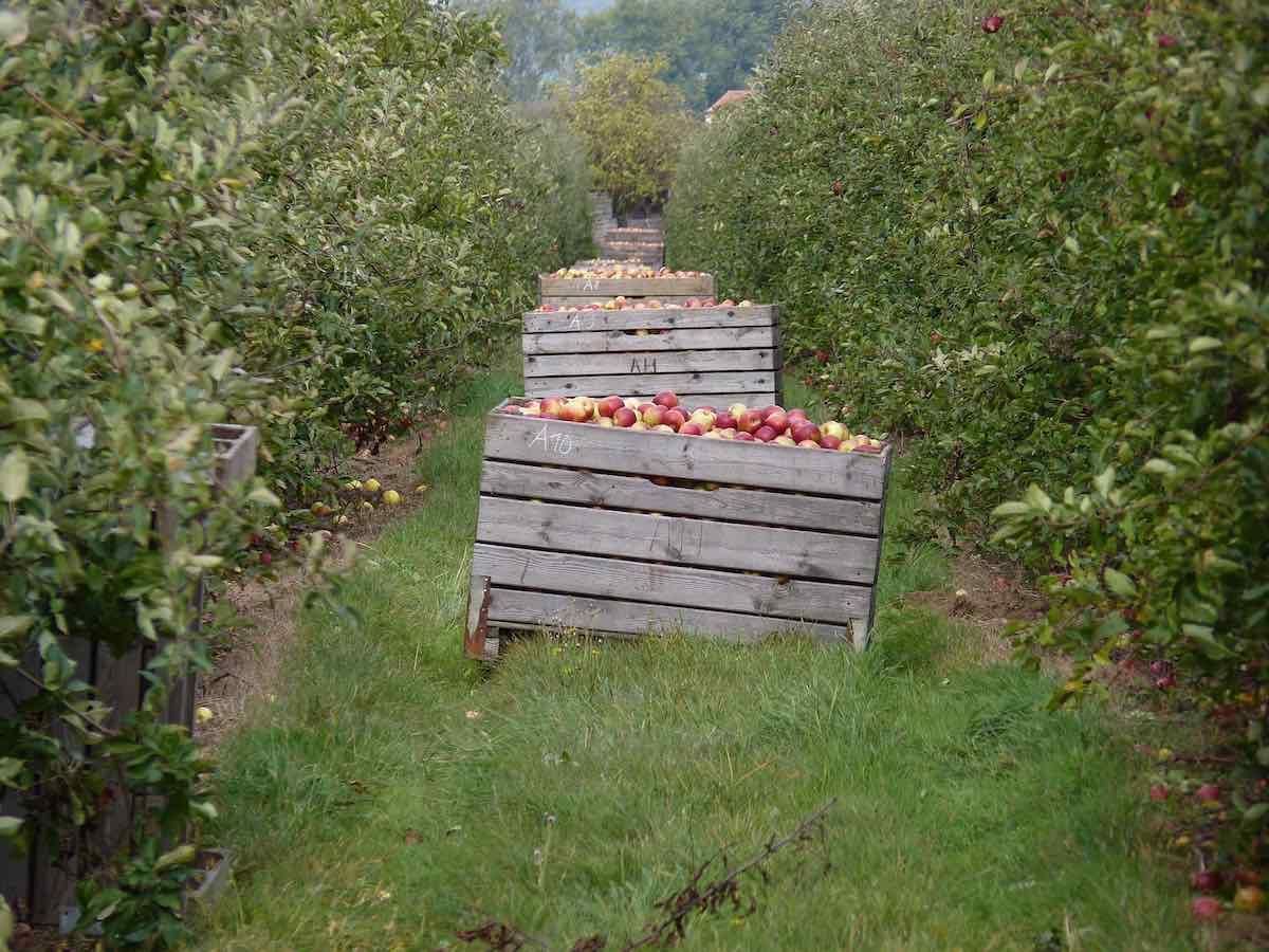 Estudio muestra que la agricultura orgánica puede alimentar al mundo