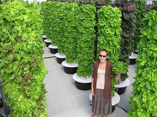 Ideas para montar un huerto vertical - Jardin vertical en casa ...