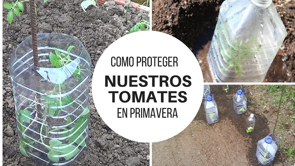 Como proteger nuestros tomates en primavera