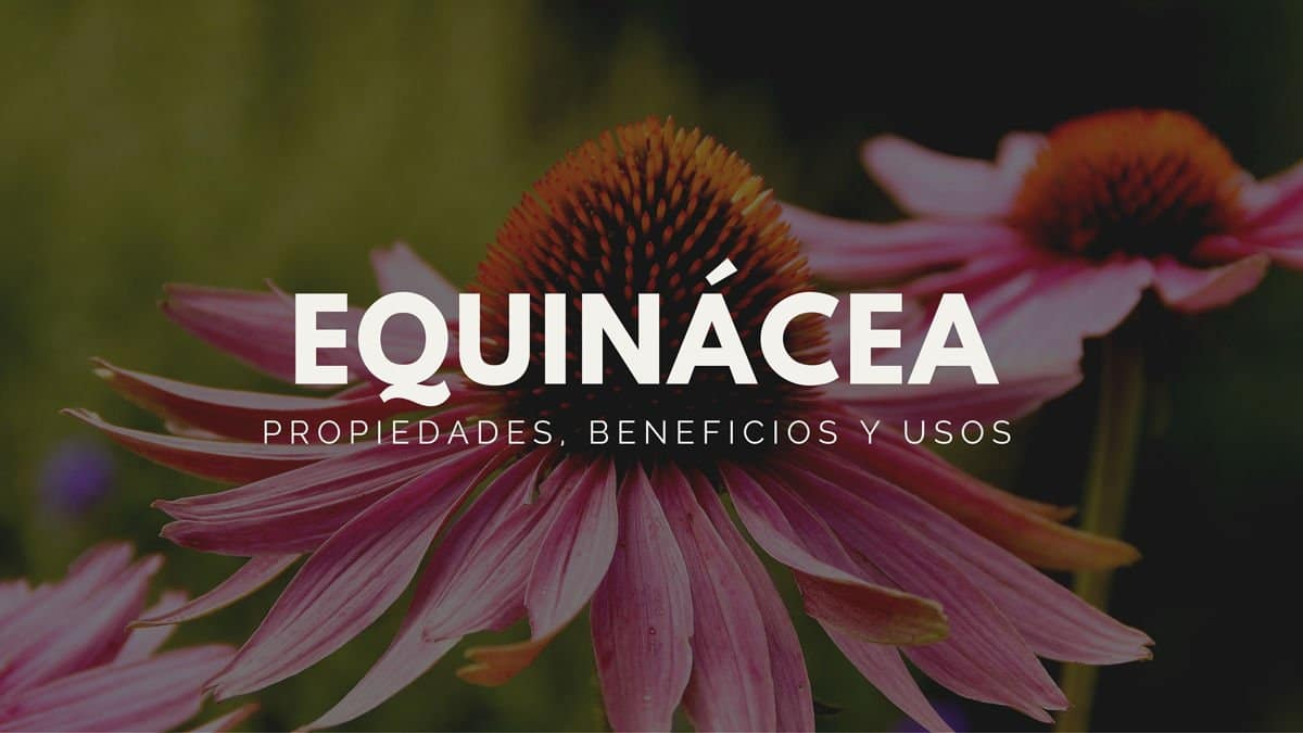 Equin%c3%a1cea