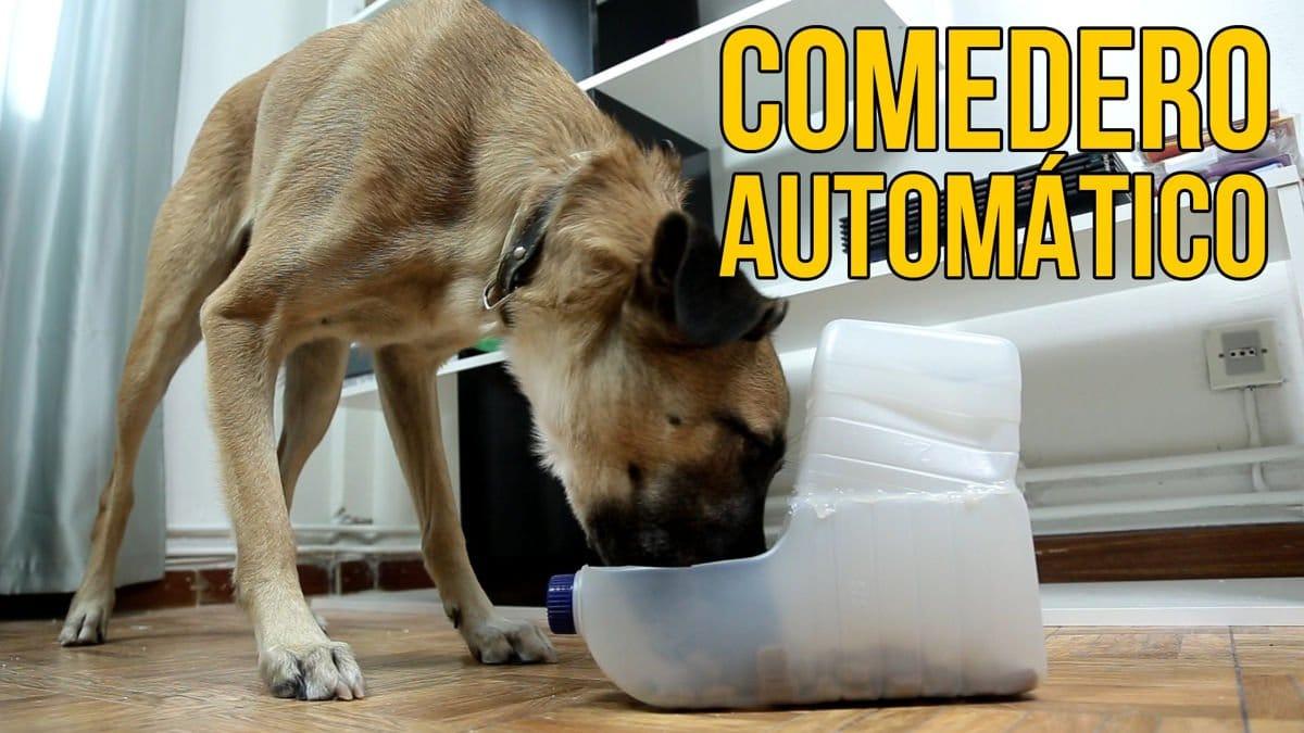 Como-hacer-un-comedero-automatico-para-perros