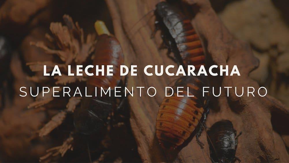 Leche-de-cucaracha-superalimento